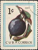 Frutta tropicale - caimito — Foto Stock