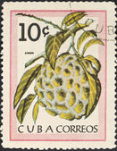 Frutta tropicale - anon (zucchero-apple) — Foto Stock