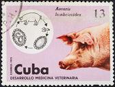 Ciclo di vita di ascaris lumbricoides nel maiale — Foto Stock