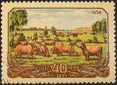 Animal husbandry in Soviet Russia — Stock Photo