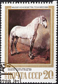 Gray Orlov trotter breed horse — Stock Photo