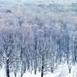 Cold blue dawn over snowy forest in winter — Stock Photo
