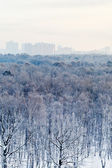Frozen dawn over city park in winter — Foto de Stock