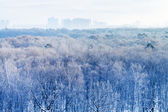 Early morning over frozen urban park in winter — Foto de Stock