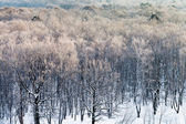 Snowy forest in cold winter morning — Foto de Stock