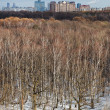 Stock Photo: Cityscape with spring thawing in park