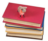 Top view of felt soft toy sheep on books — Stock Photo