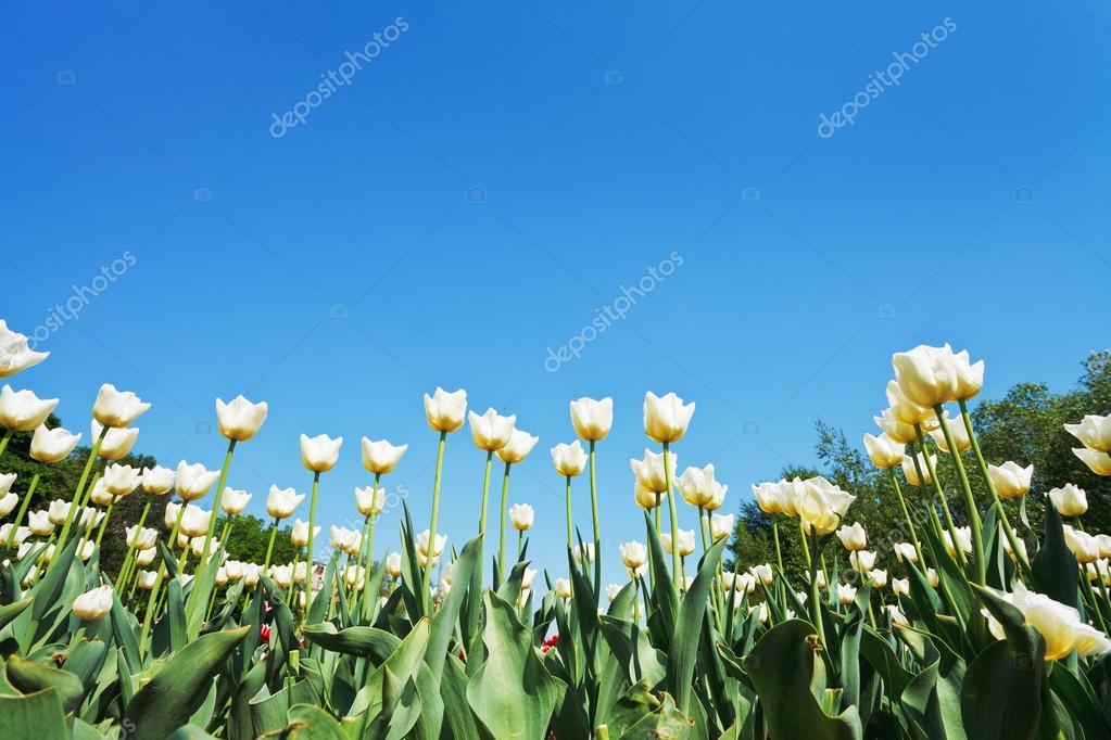 Немофилы, цветы, голубые, зелень, нежность скачать картинки новинки