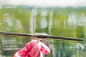 Hand in pink glove cleans window glass by squeegee — Foto de Stock