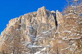 Bare tree and rock in Dolomites mountain — Stock Photo