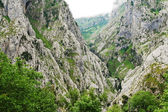 Mountain gorge in national park Picos de Europa — Stock Photo