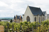 Vineyard in Angers Castle, France — Stock Photo