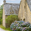Постер, плакат: Hydrangea flowers near typical old breton houses