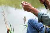 Fisherman caught small bream fish — Stock Photo