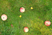 Few fallen ripe apples lie on green grass — Stock Photo
