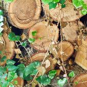 Woodpile of old woods — Stock Photo