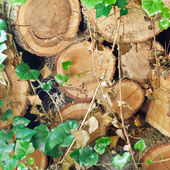 Woodpile of old woods — Stock Photo