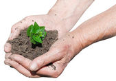 Farmer hands with soil and green sprout — Stock Photo