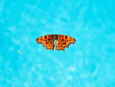 Dead insects and butterfly on surface of water — 图库照片