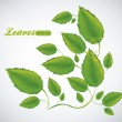 Royalty-Free Stock Vector Image: Illustration of green leaves