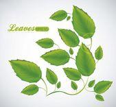Illustration of green leaves — Stock Vector