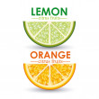 Citrus fruit — Stock Vector #30892435