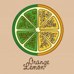 Citrus fruit — Stock Vector #30893923