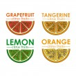 Citrus fruit — Stock Vector #30894715