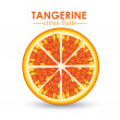 Tangerine citrus fruit — Stock Vector
