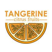 Tangerine citrus fruit — Stock Vector