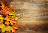 Yellow wet autumn leaves on the background a dark old wood — Stock Photo