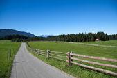 Boerderij en koeien — Stok fotoğraf