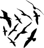 Seagull vector silhouettes illustration, set of ten — Stock Vector