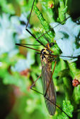 Insect on shrub — Stock Photo