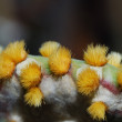Stock Photo: Fine cactus spines