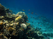 Coral reef in sea — Stock Photo