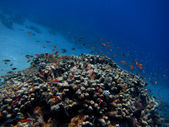 Renkli mercan ile çok sayıda balıkçı — Stok fotoğraf