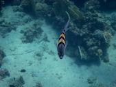 Små fiskar nära — Stockfoto