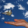 Hand with sky and butterfly — Stock Photo #23468858