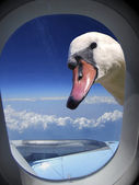 View swan from airplane — Stock Photo