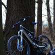 Mountain bike in forest portrait — Stock Photo #25462899