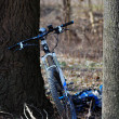 Mountain bike and tree — Stock Photo
