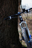 Mountain bike and tree portrait — Stock Photo