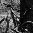 Stock Photo: Mountain bike in forest horizontal