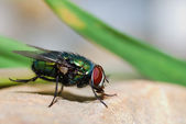 Fly on a rock — Stock Photo