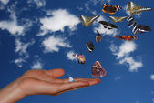 Hand with sky and many butterflies — Stock Photo