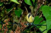 赤ちゃんの鳥 — ストック写真