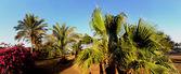 Palm trees on beach panorama — Stock Photo