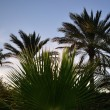 Many palms — Stock Photo