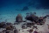 Amphoras on the sea — Stock Photo
